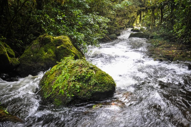 The river continuing to cascade away from the waterfall, cutting through dense native forest. Every stone, boulder, and tree trunk is carpeted in moss, perpetually saturated by the waterfall's spray.